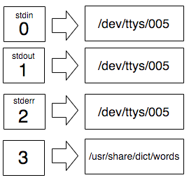 The list of file-descriptors from 0 to 3 on the left. Above 0, 1, and 2 we can see `stdin`, `stdout`, and stderr` and they point to the tty file. The file descriptor 3 points to /usr/share/dict/words